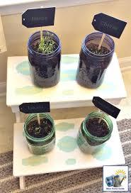 Kitchen Herb Gardens Diy Kitchen Herb Garden