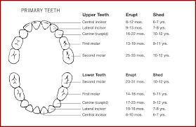 Teething Chart For Babies Tooth Eruption Chart Baby Teeth Age Lose What Do Fall Out Radrlab Co