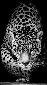 jaguar iphone wallpaper beautiful best iphone wallpapers vveg