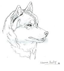 Baby Husky Coloring Pages - Eliolera.com