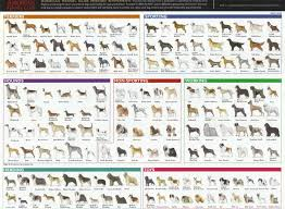 dog chart species and breeds dog breeds chart dog breeds list dog
