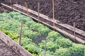 bird netting for garden. Perfect Garden Bird Netting For Gardens On Bird Netting For Garden V