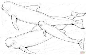 Small Picture Beluga Whales coloring page Free Printable Coloring Pages