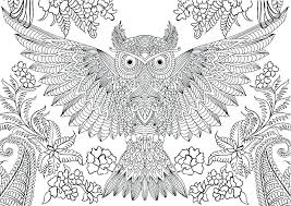 Owl Coloring Page Printable Owl Printable Coloring Pages Owl