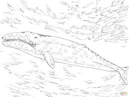 Small Picture Gray Whale coloring page Free Printable Coloring Pages
