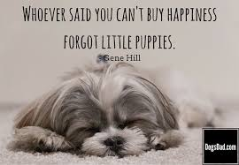 cute dog quotes and sayings. Simple Sayings Cute Puppy Quotes Quotes And Sayings About Puppies Dogs With  For Dog And C