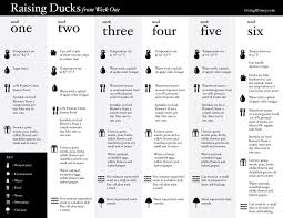 Duckling Age Chart Google Search Going Duckers