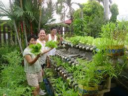 Kitchen Garden In Pots Vegetable Garden In Pots Within Growing Vegetables In Pots Growing