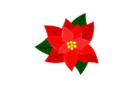 Poinsettia Designs Red Poinsettia Flower