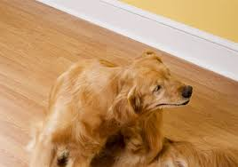 Pet Points: New treatments for dogs' skin problems | Pittsburgh Post ...