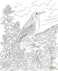 Small Picture Coloring Pages Of Flowers And Birds Coloring Pages