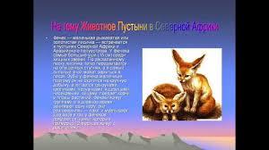 Презентация на тему животное пустыни в северной Африки Автор  Презентация на тему животное пустыни в северной Африки Автор Коняхина Екатерина
