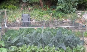 protect your vegetables from garden pests