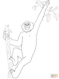 Small Picture Pygmy Chimpanzee Bonobo coloring page Free Printable Coloring Pages