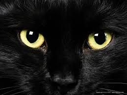 black cats with green eyes wallpaper. Wonderful Eyes As Companion Animals For Humans Thousands Of Years Cats Play All Sorts  Mythological Roles Description From Pearlsofprofunditywordpresscom With Black Cats Green Eyes Wallpaper
