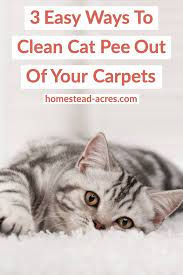 cat smell out of your carpet