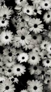 Iphone Cute Wallpapers Black And White