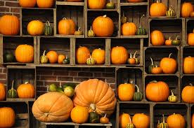 Fall Pumpkin Wallpaper on WallpaperSafari