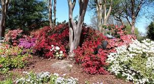 shade plants that grow well under trees