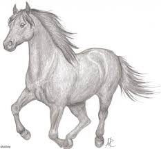 running horse drawing. Wonderful Drawing Pencil Sketches Horses Running Horse Sketch Of  Intended Drawing