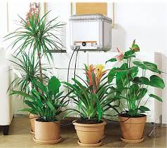 8 automatic plant watering systems to