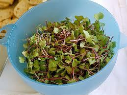 gluten free tuesday micro greens recipe