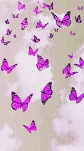 Aesthetic Butterfly Wallpaper - HayPic
