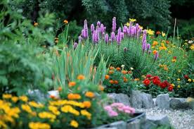 choosing plants for a small garden space