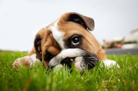 Dog Worm Identification Chart Worms In Dogs What Are The Types Symptoms And Treatments