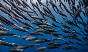 Mercury Levels In Fish Chart Climate Change And Overfishing Are Boosting Toxic Mercury