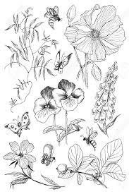 ビンテージの植物園詳細図の野生の花を設定します彫刻スタイル手の図面の図ベクトル夏の植物と蜂