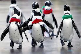 cute penguins.  Penguins Cute Penguins Inside Cute Penguins W