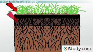 soil erosion effects prevention