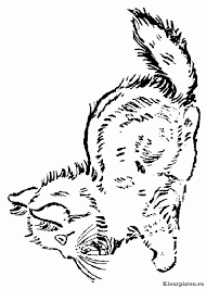 Kitten Kleurplaat Elegant Totoro Kleurplaten Kittens Kleurplaat