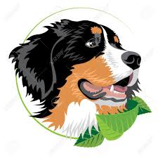 Bernese Mountain Dog Clip Art Silhouette Google Search Obrázky