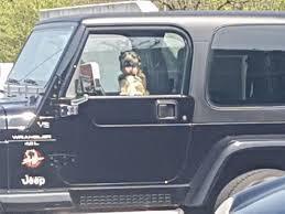 Hund In Bielefeld In Brütend Heißem Auto Eingesperrt Nwde