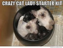 Crazy Cat Lady Starter Kit | WeKnowMemes via Relatably.com