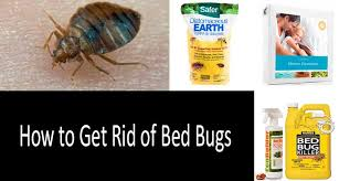 rid of bed bugs