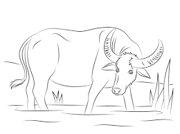 Small Picture Water Buffalo coloring page Free Printable Coloring Pages