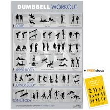 Fly 30 Chart Dumbbell Workout Exercise Poster Guide 30x20 Laminated Gym Chart