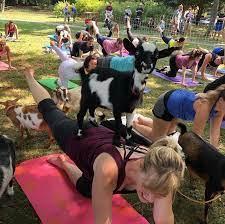 goat yoga beth a wolfe