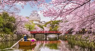 Bunga Sakura Inilah Jadwal Dan Lokasi Melihat Bunga Sakura Di Jepang 2019
