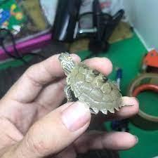 bé gái có đuôi rùa hashtag trên BinBin: 62 hình ảnh và video