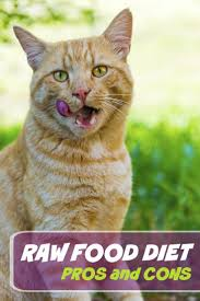 Raw Food Diets for Cats: The Pros and Cons
