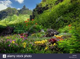 flowers at limahuli garden kauai hawaii