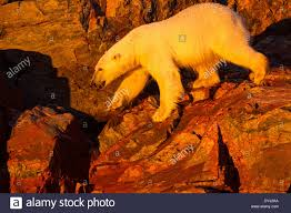 Bear Claw Lights Canada Nunavut Territory Setting Midnight Sun Lights Polar