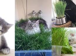 diy indoor cat garden for cat lovers cat lovers 27 diy