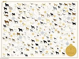 Dog Genealogy Chart The Family Tree Of Dogs Chart Reveals How Every Breeds