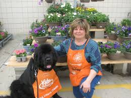 socrate forever newfoundlands however some owners have difficulty finding the right job for their dog typically the reason s why owners don t their dog a job can boil down