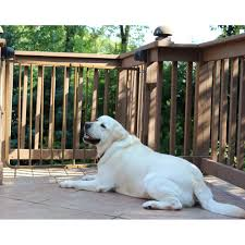 outdoor pet gates wayfair